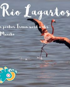 Rio Lagartos mit Flamingo