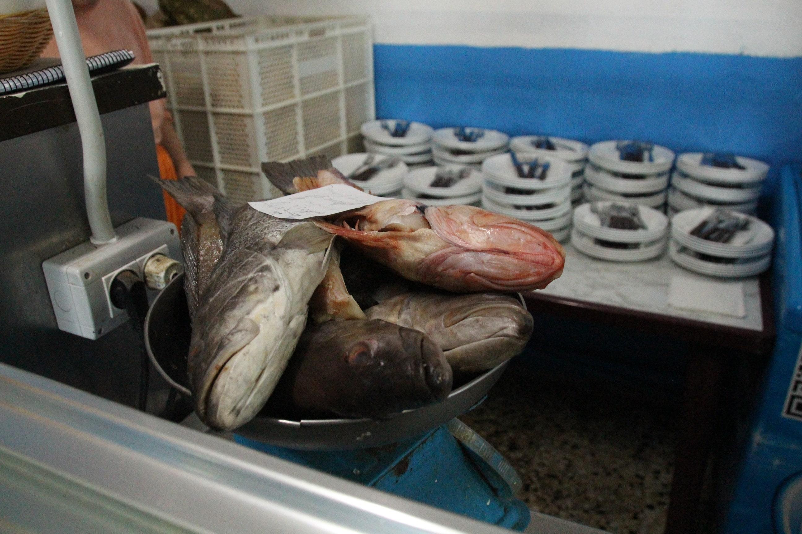Casa Africa Fisch-min
