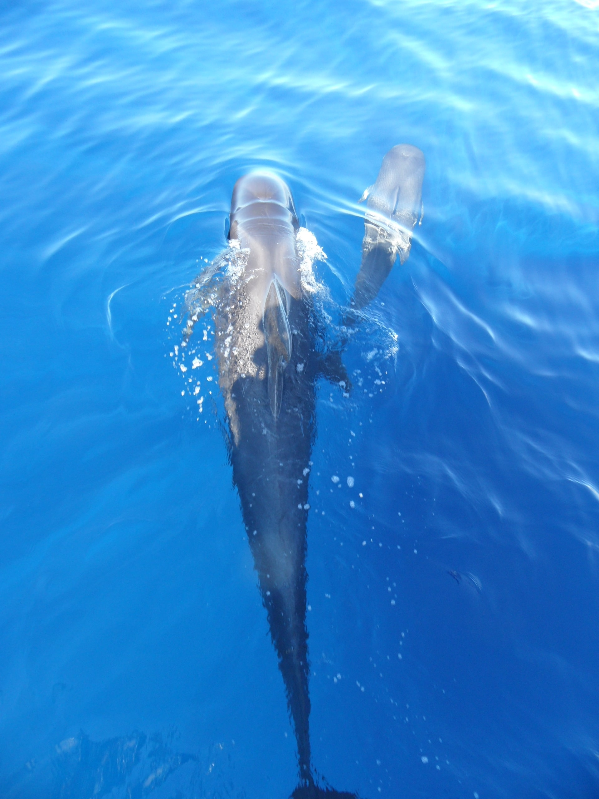 Delfin mit Baby