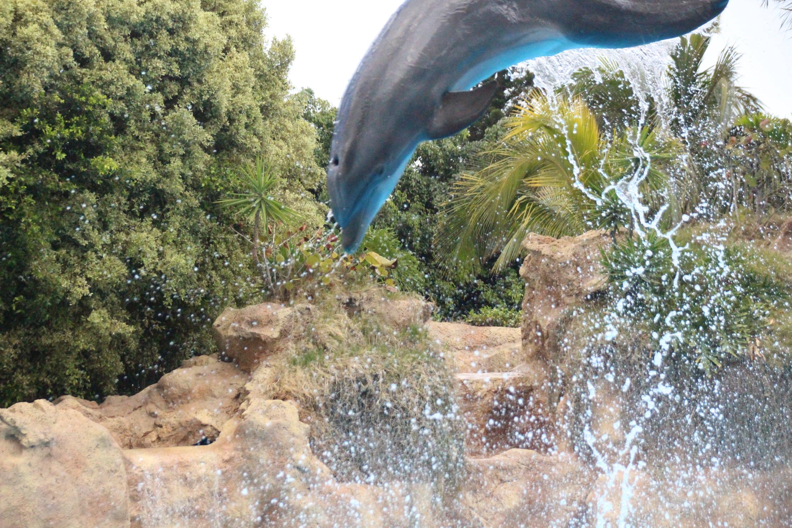 Loro Parque Delfin