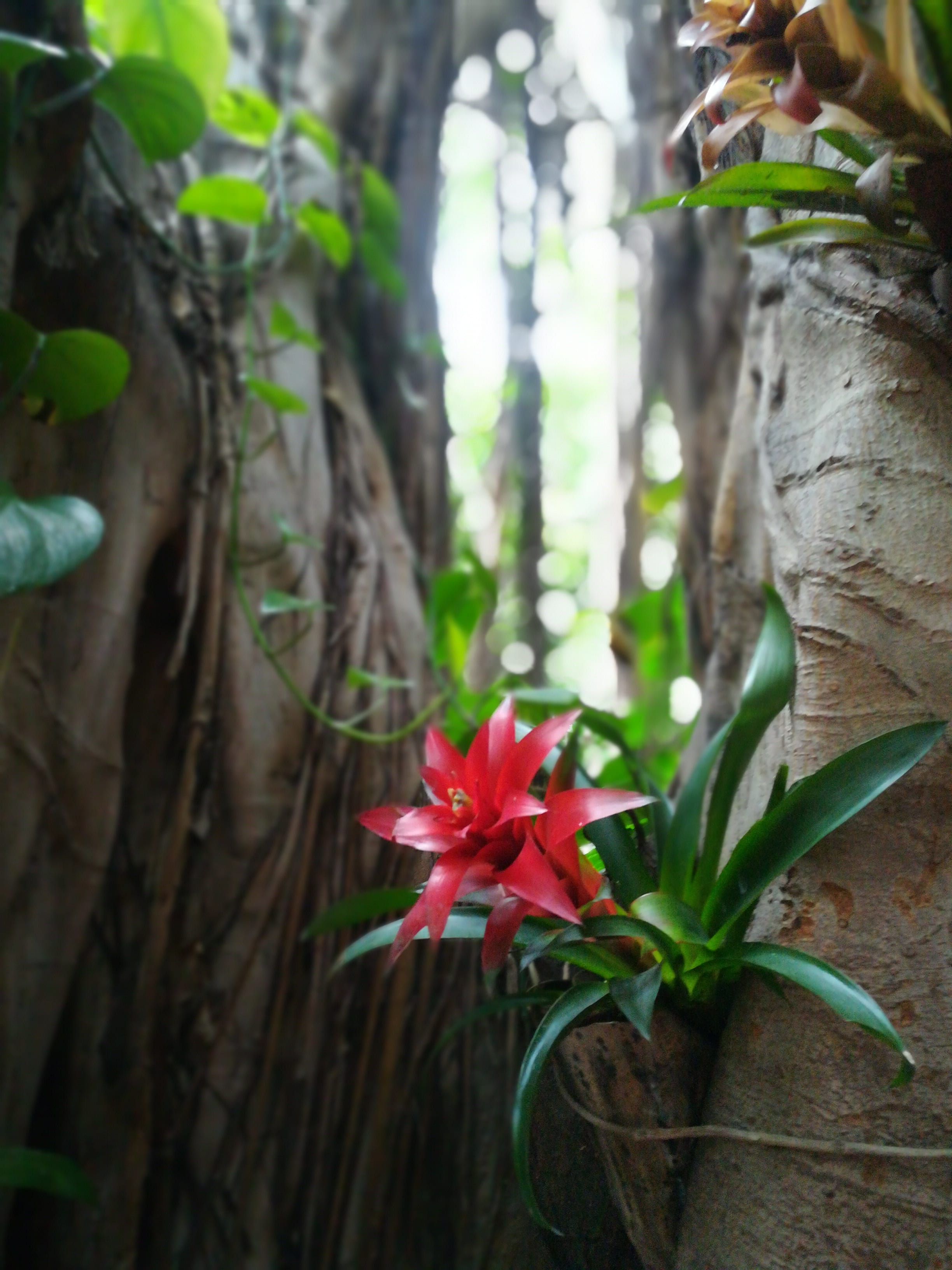 Pflanze rot