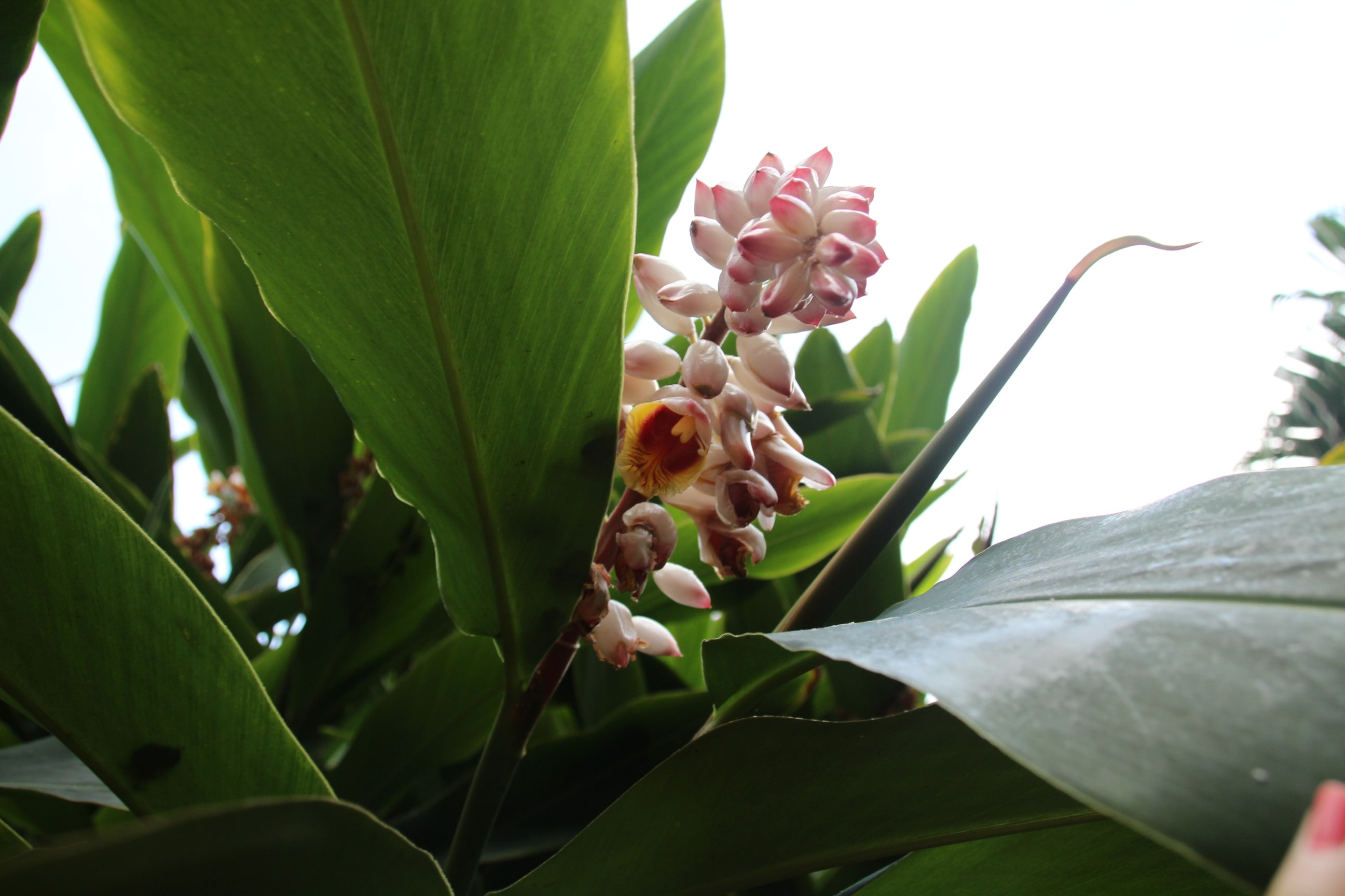 Teneriffa exotische Blume 2