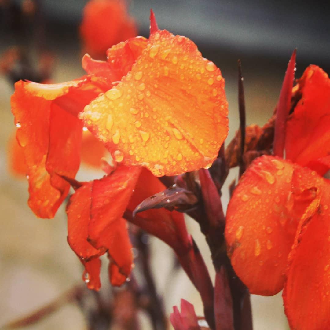 Blumen in orange