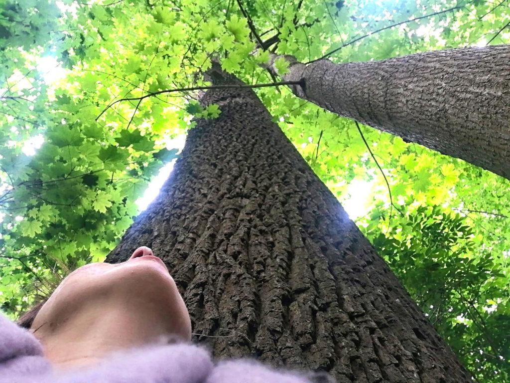 Wald Urlaub mit Bäumen
