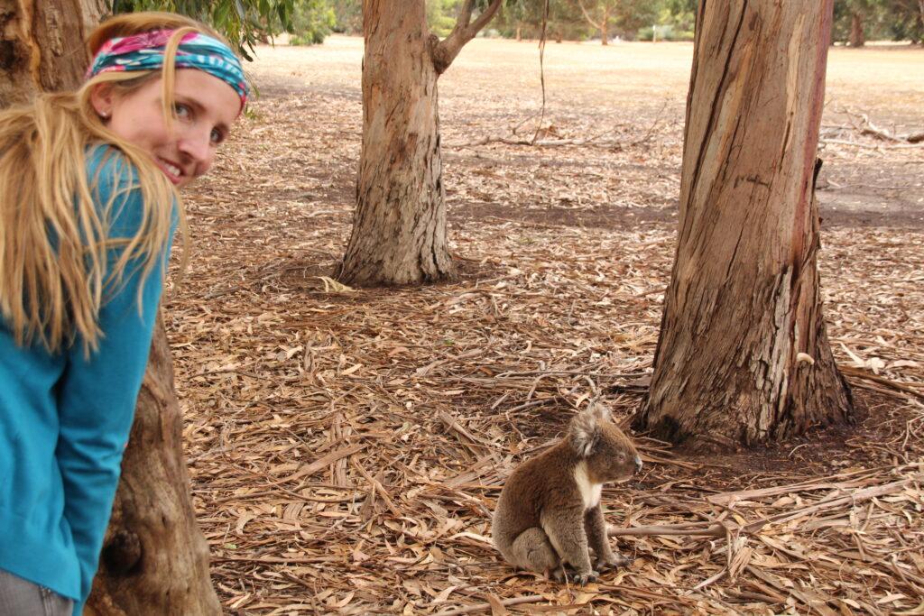 Koala zum Anfassen Australien